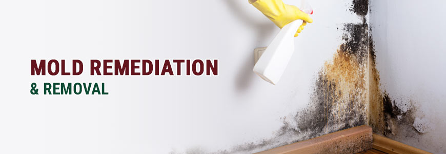 Mold Remediation & Removal